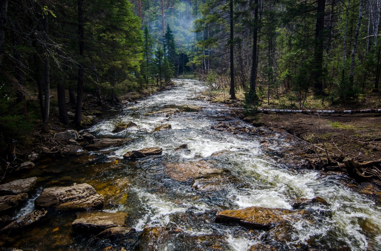 river running through forest